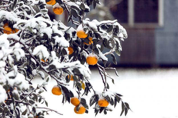 Отглеждане на плодове и опазване на културите